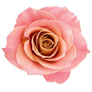 cosmetique rose
